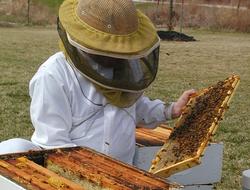 apicultor, El