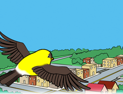 Bird Goes Home