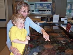 At a Touch Tank