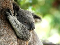Cómo duermen los animales
