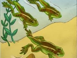 Cómo crecen las ranas