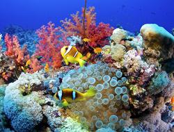 récifs de corail, Les