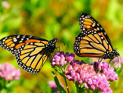 Butterfly Life Cycle, The