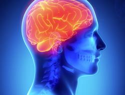 Amazing Brain, The