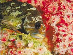 Amazing Undersea Food Web, The