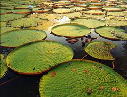Amazing Amazon, The