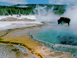Yellowstone: A Place of Wild Wonders