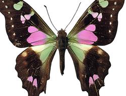 cycle de vie des insectes, Le