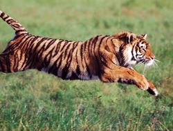 animales pueden moverse, Los