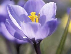 printemps est là, Le
