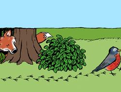 Por qué saltan los petirrojos