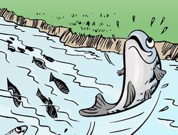 Saltadora! La historia de un salmón