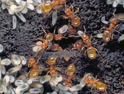 Ants, Ants, and More Ants